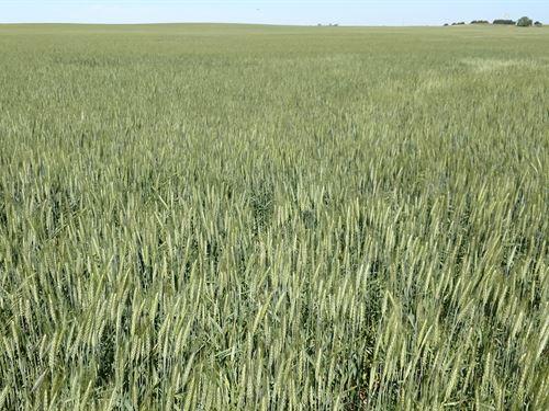 Elsie, Ne Combination Farm : Elsie : Perkins County : Nebraska