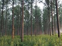 Timber Investment : Bainbridge : Decatur County : Georgia