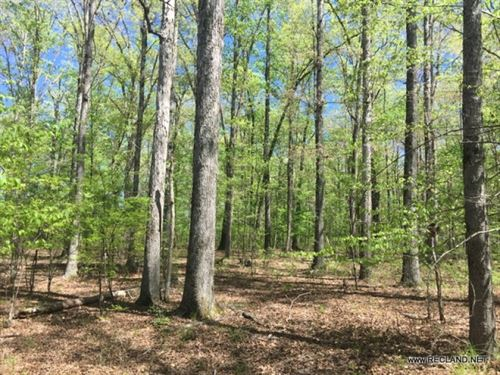 52 Ac - Hardwood Timber & Hunti : Strong : Union County : Arkansas