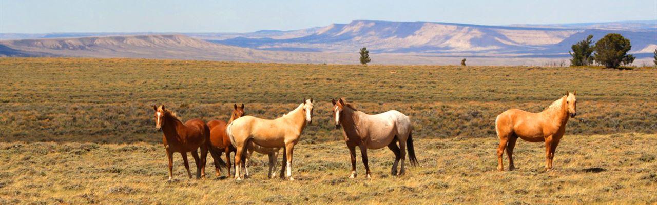 The Nevada Land Rush