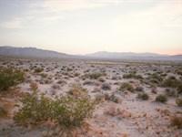 5 Acres Of Desert Paradise : Joshua Tree : San Bernardino County : California