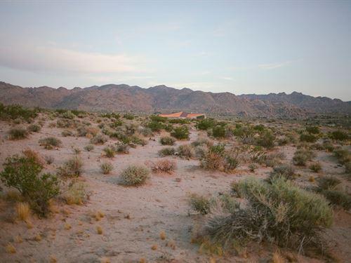 Freedom Awaits : Joshua Tree : San Bernardino County : California