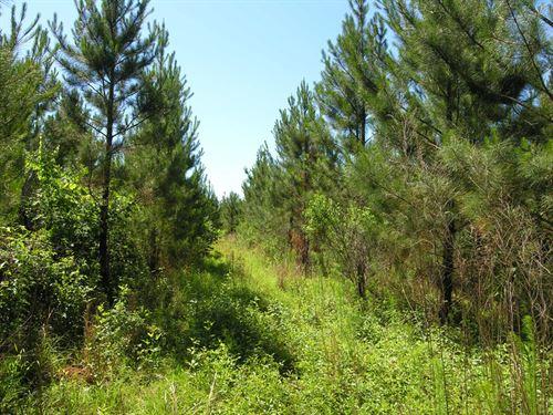 715.41 Acres Planted Pines : Talbotton : Talbot County : Georgia