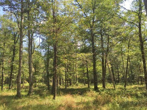 Bates Creek Tract : Citronelle : Washington County : Alabama