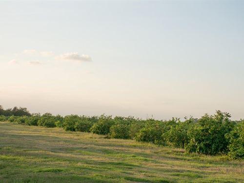 Hogan Grove : Fort Pierce : Saint Lucie County : Florida