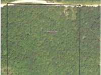 Heavily Wooded Land : Hulbert : Cherokee County : Oklahoma