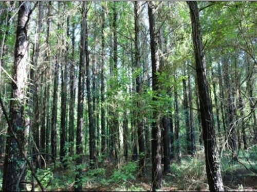47.5 Acres In Newton County : Hickory : Newton County : Mississippi