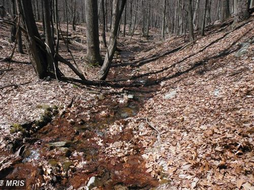 Mountain Stream : Baker : Hardy County : West Virginia