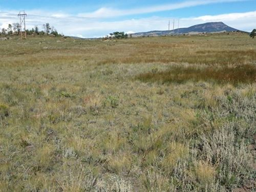 Mountain Grazing Land : Canon City : Fremont County : Colorado