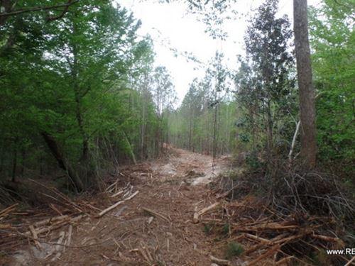 70 Ac - Timberland & Hunting : Newton : Texas