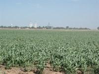 7/10 -80 Acres Of Grain And Cattle : Jet : Alfalfa County : Oklahoma