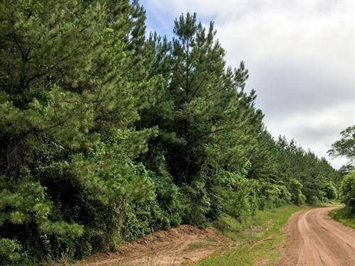 20 Ac Bluewater Road : Scwab City : Polk County : Texas
