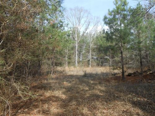 30 Acres In Lamar County : Purvis : Lamar County : Mississippi