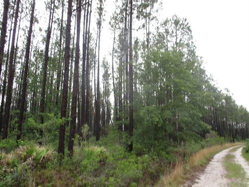 Investment Tract Offers Options : Millwood : Ware County : Georgia