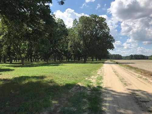 Beautiful Homesite W/ Pecan Orchard : Reidsville : Tattnall County : Georgia