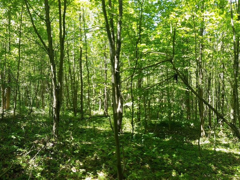 Borders Penn Mountain State Forest Farm For Sale