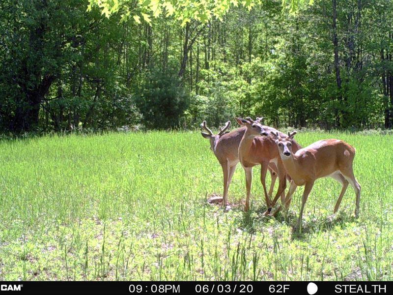 Hunt & Live Well : Fairview : Oscoda County : Michigan