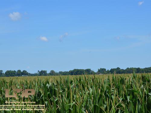 Prime Farmland & Hunting Land : Tallulah : Madison Parish : Louisiana