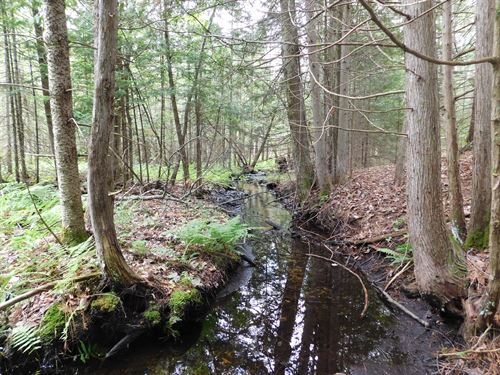Big Time Hunting On 102 Acres : Fife Lake : Kalkaska County : Michigan