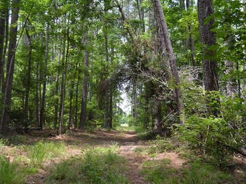 The Haskell Tract : Allendale : South Carolina