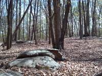 Millsville Lane : Danville : Pittsylvania County : Virginia