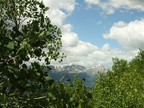 9008260 - Affordable Forest For Sal : Leadville : Lake County : Colorado