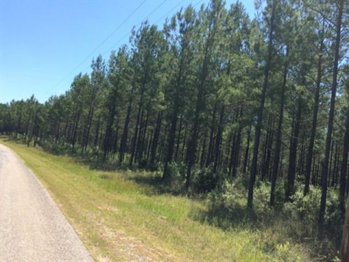 303 Acres For Sale Pearl River : Poplarville : Pearl River County : Mississippi