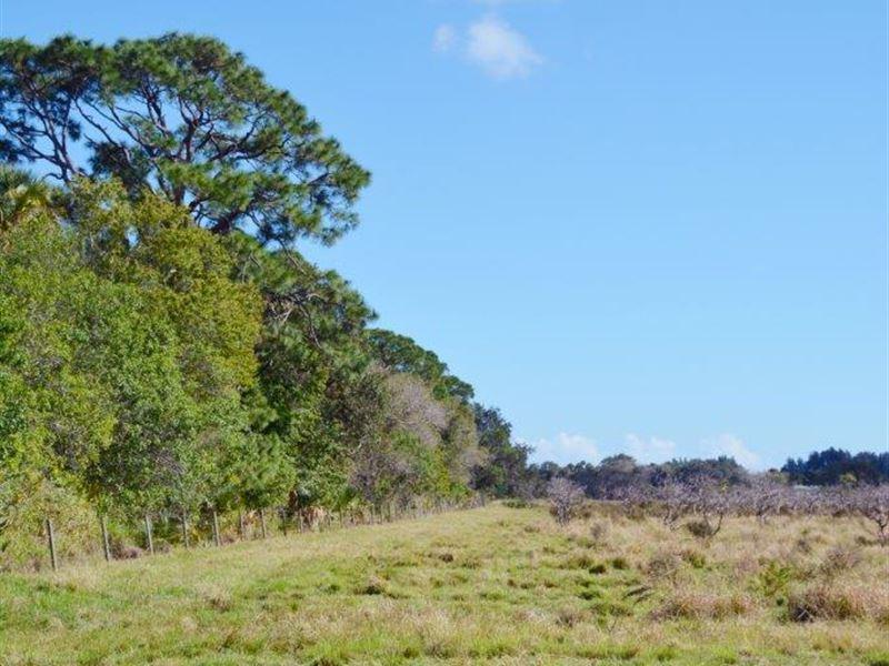 Johnston Road Acreage : Fort Pierce : Saint Lucie County : Florida