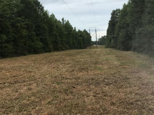 Small Hunting Tract Close To La Lin : Osyka : Pike County : Mississippi