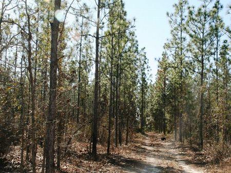 Longleaf Farms : Quincy : Gadsden County : Florida