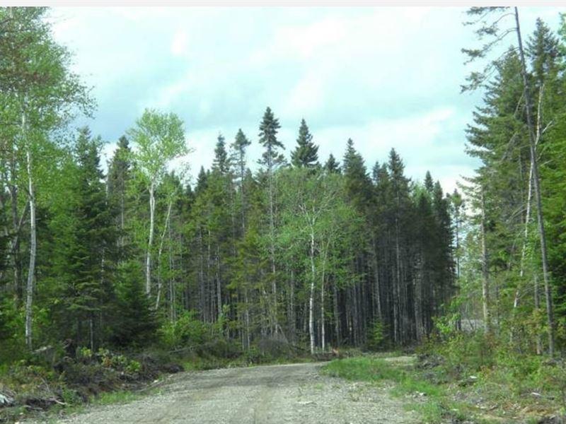 86 Acres In Limestone, ME : Limestone : Aroostook County : Maine