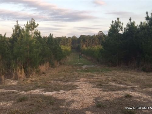 709 Ac, Timberland & Hunting : Woodville : Tyler County : Texas