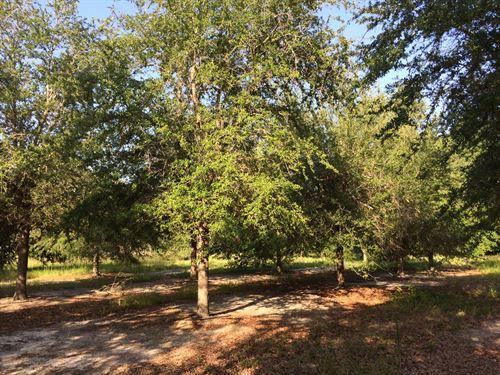 McMillan Tree Farm Tract 6 : Ehrhardt : Bamberg County : South Carolina