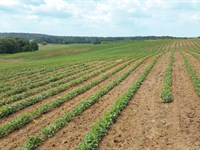 Pristine Development / Agriculture : Deer Lodge : Morgan County : Tennessee