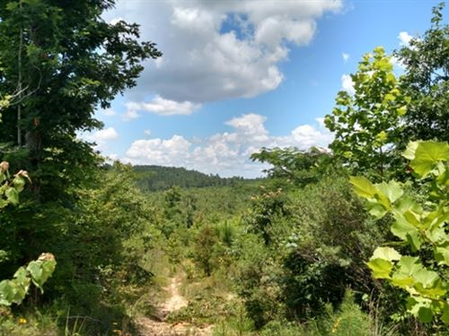 80 Acres Of Hunting Land : Bellefontaine : Webster County : Mississippi