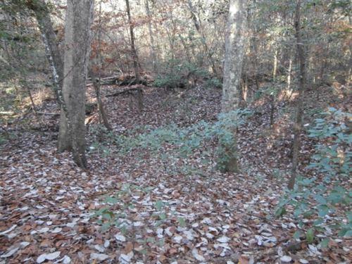 32.8 Ac - Timberland For Home Site : Jasper : Texas