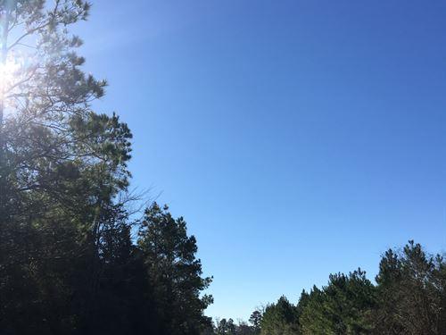 20.5 Acres Tract 4B Bold Springs : Livingston : Polk County : Texas