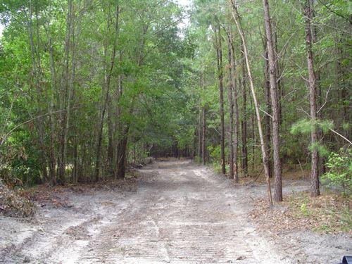 Thompson Paradise : Walterboro : Colleton County : South Carolina