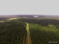 99.8 Ac - Timberland For Home Site : Joaquin : Shelby County : Texas