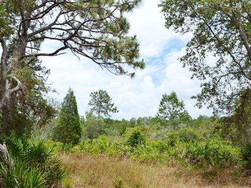 Hidden Lake Acreage : New Port Richey : Pasco County : Florida