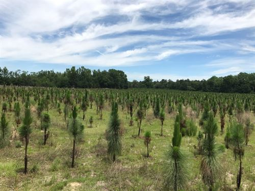 Pryor Tract : Newington : Screven County : Georgia