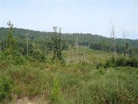 Prime Tract For Timberland/Private : Dayton : Rhea County : Tennessee