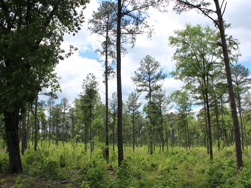 Timber Tract- Ample Road Frontage : Sparta : Hancock County : Georgia