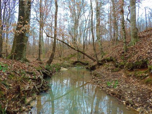 1325 Ft Of Creek Frontage : Crawfordville : Taliaferro County : Georgia