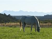 McElmo Canyon Ranch : Cortez : Montezuma County : Colorado