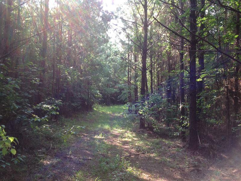 285 Acres Of Timberland : Camden : Wilcox County : Alabama