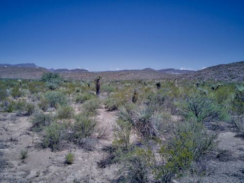 Tract 518: 40 Acres Of High Desert. : Terlingua : Brewster County : Texas