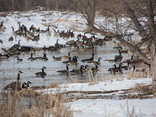 North Platte River Farm And Hunt : Lewellen : Garden County : Nebraska