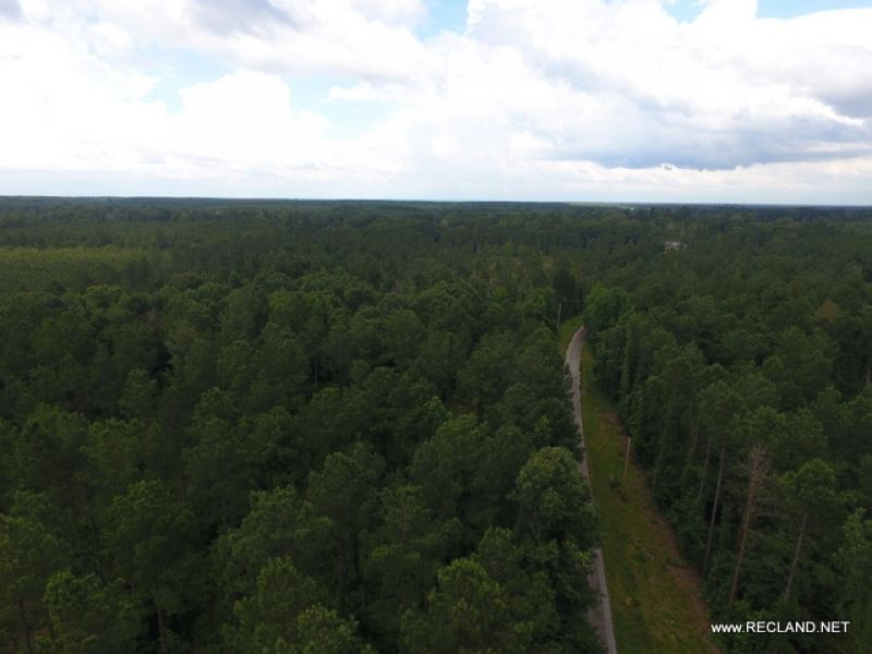 40 Ac - Timberland For Home Sites : Grayson : Caldwell Parish : Louisiana