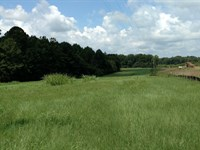Beautiful Pasture And Big Oaks : Rayle : Wilkes County : Georgia